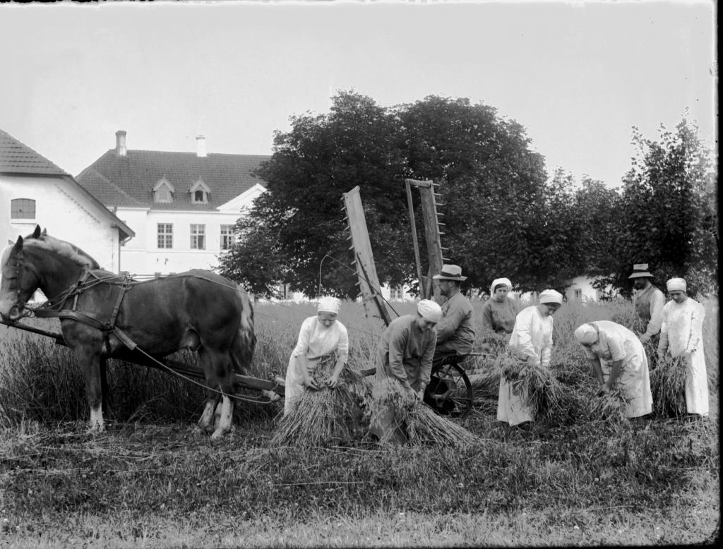 Gymnastik 1915 på Vejstrup Pigehjem. (Gudme Lokalhistoriske Arkiv)